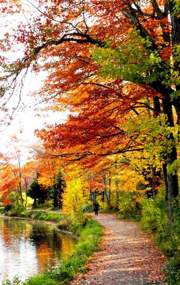 Золотая осень фото пейзажи вертикальная картинка